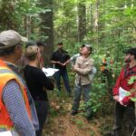Une nouvelle étude aborde les effets des changements climatiques sur les forêts canadiennes