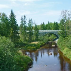 Forest operations solutions to help the Canadian forest industry